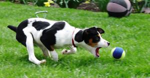 Chasing the tennis ball