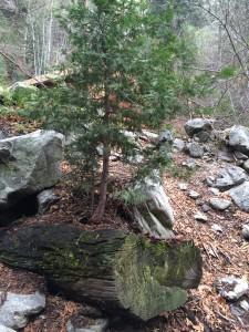 Tree-new life