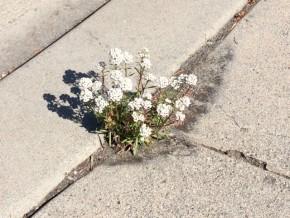 Bloom in the Cracks